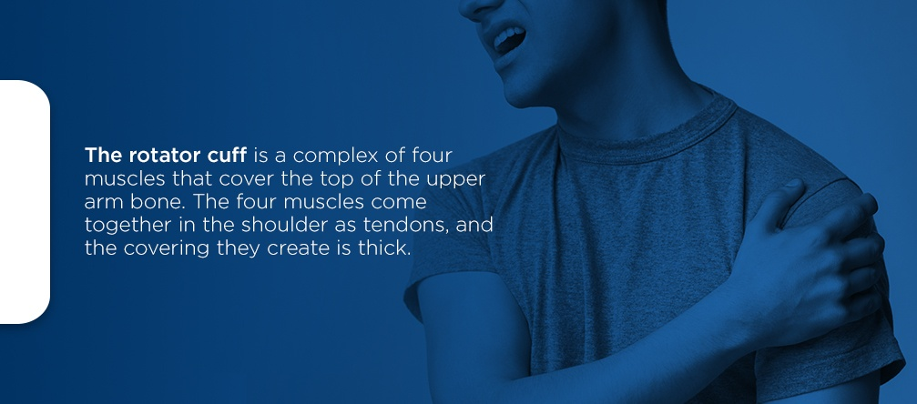 the rotator cuff is a complex of four muscles that cover the top of the upper arm bone. The four muscles come together in the shoulder as tendons, and the covering the create is thick