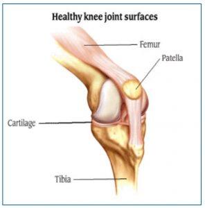 Healthy knee