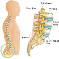 lumbar anatomy diagram