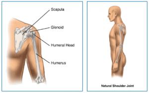 natural shoulder joint diagram