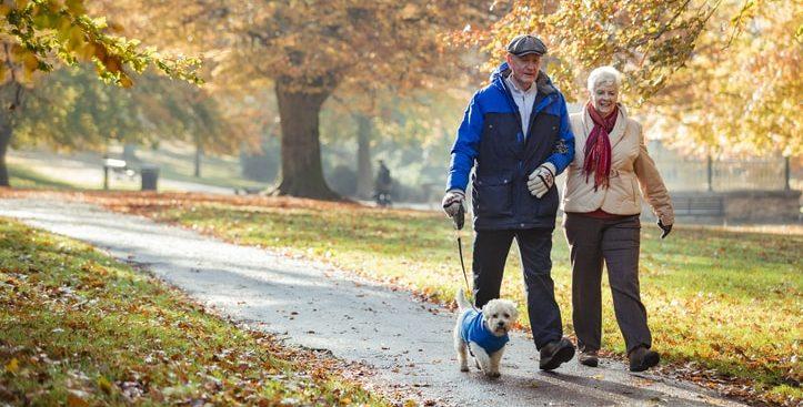 elderly couple walking dog in park