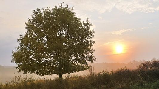 aspen hill and white oak maryland